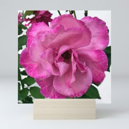 Bodacious Pink Rose | Large Pink Flower | Nature Photography Mini Art Print