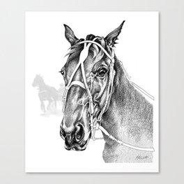 Sir Castleton (NZ) - Standardbred Canvas Print
