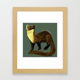 Fluffy Marten ( Martes martes ) Framed Art Print