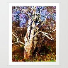 Old Sycamore tree Art Print
