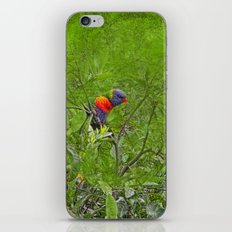 Grunge Rainbow Lorikeets in a tree iPhone Skin