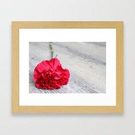 1 Pink Carnation Framed Art Print
