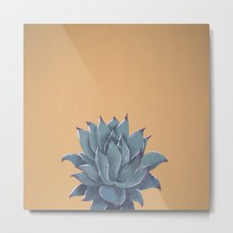 Echeveria Colorata Acrylic Metal Print