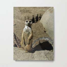 The Most Interesting Meerkat in the World Metal Print