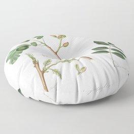 Pistachio (Pistacia vera) from Pomona Italiana (1817 - 1839) by Giorgio Gallesio (1772-1839) Floor Pillow