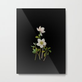 Helleborus Niger Mary Delany Delicate Paper Flower Collage Black Background Floral Botanical Metal Print