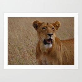 lion facing you Art Print