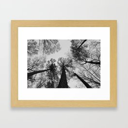 Tree Tops Framed Art Print