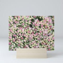 Mint Green and Blush Pink Sedum Mini Art Print