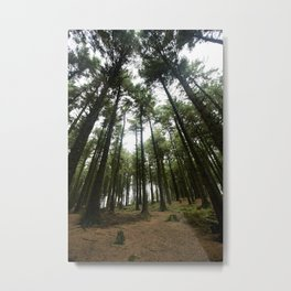 Forest of Bowland Metal Print