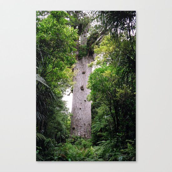 The World's Oldest Wood, Ancient Kauri Canvas Print