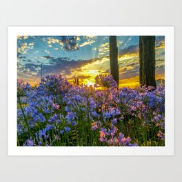Sunrise over Lily of the Nile Art Print