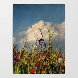 colored swords - field of Gladiola flowers Poster