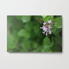 Rain Dewed Purple Flowers Metal Print