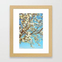 Lily magnolia in blue sky Framed Art Print