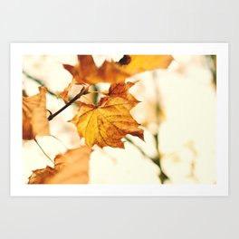 A Fall Like This Art Print