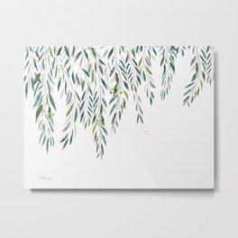Eucalyptus - Gully gum Metal Print