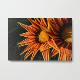 Orange Flower (Close-up) Macro Metal Print