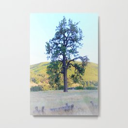 Tall Pine in the California Meadow by Reay of Light Metal Print