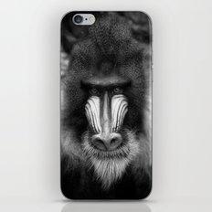 King Monkey iPhone & iPod Skin