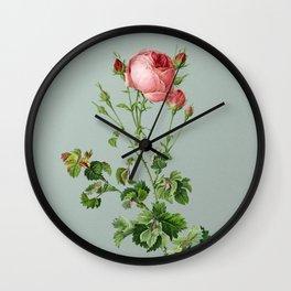 Vintage Celery Leaved Cabbage Rose Botanical Illustration on Mint Green Wall Clock