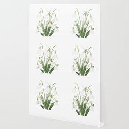 white snowdrop flower watercolor Wallpaper