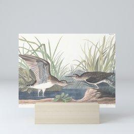 Solitary sandpiper, Birds of America, Audubon Plate 289 Mini Art Print