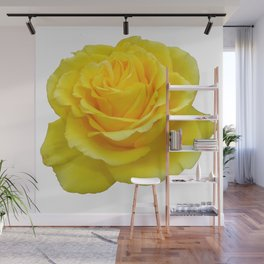 Beautiful Yellow Rose Closeup Isolated on White Wall Mural