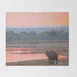 Walk in the evening light, Africa wildlife Throw Blanket