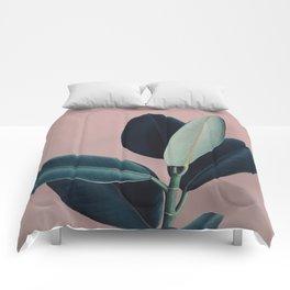 Ficus elastica - berry Comforters