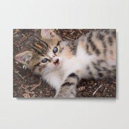 Playful Kitten Metal Print