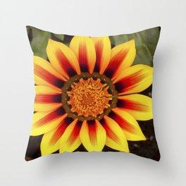 Gazania Flower Throw Pillow