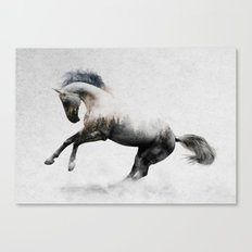 White Stallion Canvas Print