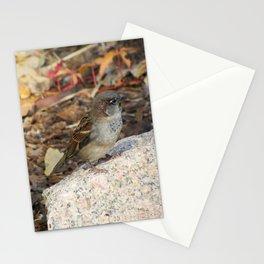 little bird on rock - 001 Stationery Cards
