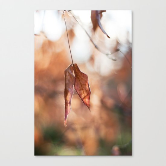 Late Autumn Light II Canvas Print