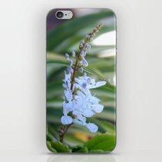 Dollar flower iPhone & iPod Skin