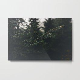 Nature closeup - spruce Metal Print