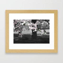 Crab Apple in Pink Framed Art Print