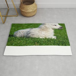 A Sleepy Newborn Lamb In A Field Rug