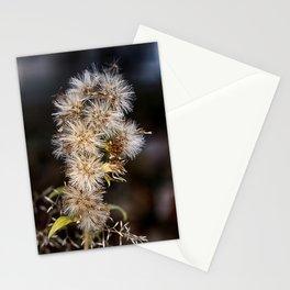 MacroFlower Stationery Cards