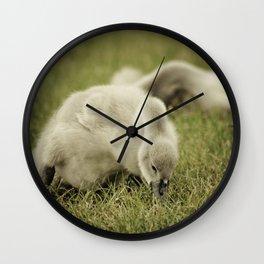 Baby Swan Wall Clock