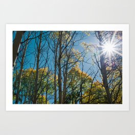 Fall Aspen Trees Art Print