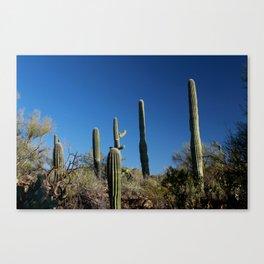 Saguaro Cactus at Picture Rocks I Canvas Print