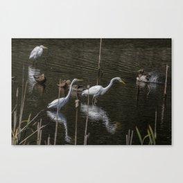 Three Great Egrets Among the Ducks, No. 1 Canvas Print