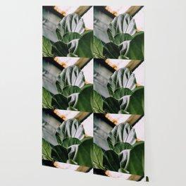 fiddle leaf light Wallpaper