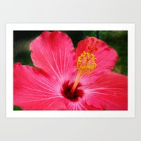 hibiscus Art Prints featuring hibiscus by Dottie