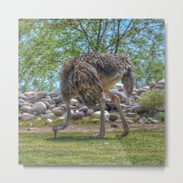 Big Bird Metal Print