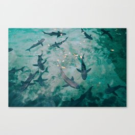 Shoal of Sharks (Color) Canvas Print