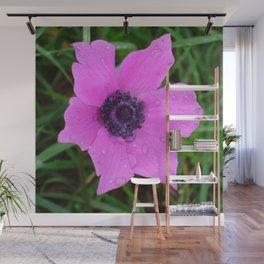 Purple Anemone - Anemone Coronaria Flower Wall Mural