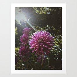 Lush Sunbeam Art Print